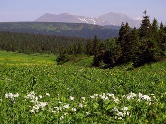 Альпийское разнотравье. Фото Виктора Семенова