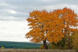 В зеленый лес прокралась тихо осень
