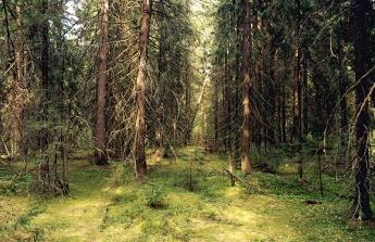В чаще леса. фото Богданов Г.А.