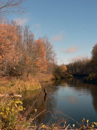 Золотая осень. Фото Исаев А.В.
