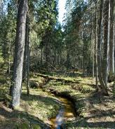 Кологривский лес. Фото С. Черенкова