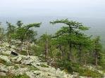 Лиственничные насаждения у верхней границы леса на Тулымском камне