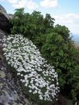 На склоне гор качим и можжевельник. Фото Н.Зенковой