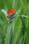 Огненная бабочка. Фото М.Шангареев