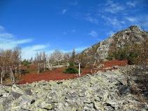 Осень в тундре Северного Басега. Фото В. Лейриха