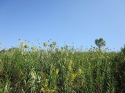 Памятник природы Медвежья поляна (фото: Лилия Султангареева)