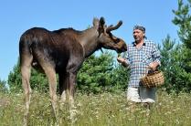 Фаун-парк Ноев ковчег. Племзавод Серая лошадь