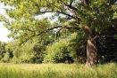 Кленовогорская дубрава